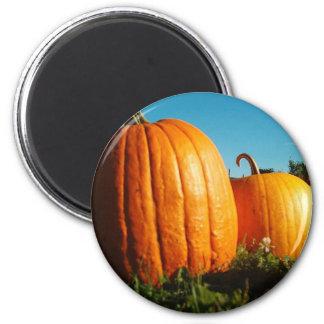 Pumpkins_Hancock_Shaker_village_2418 Magnet