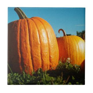 Pumpkins_Hancock_Shaker_village_2418 Tile