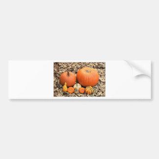Pumpkins In Leaves Bumper Sticker
