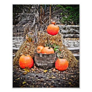 Pumpkins in Quebec Photo Print