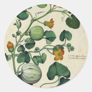 Pumpkins Squash Vintage Botanical Print Classic Round Sticker