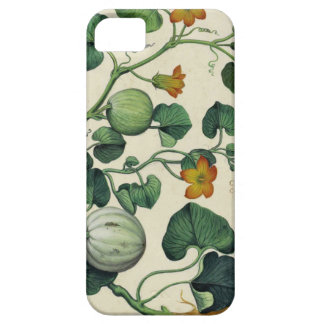 Pumpkins Squash Vintage Botanical Print iPhone 5 Case
