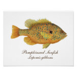 Pumpkinseed Art Poster