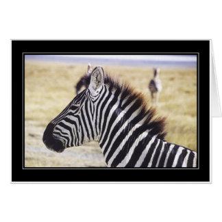 Punda Milia (Zebra) Profile Card