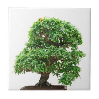 Punica Granatum bonsai tree Tile