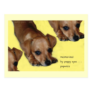 Pupnosis Haiku Art Postcard - Collectible Postcard
