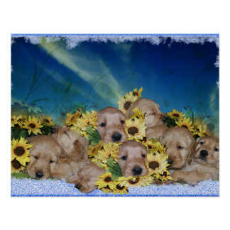 PUPPIES AND FLOWERS (GOLDEN RETRIEVERS) POSTER