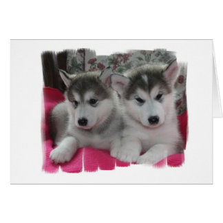 Puppies Card