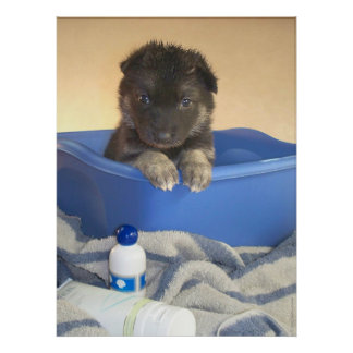 Puppies First Bath Poster