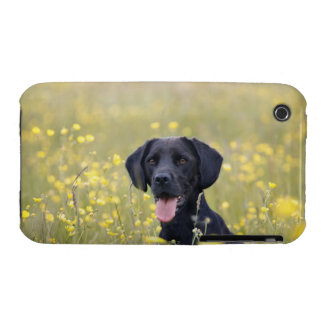 Puppy 16 Months 2 iPhone 3 Case-Mate Cases