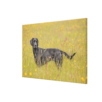 Puppy 16 Months Gallery Wrapped Canvas