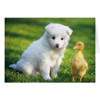 Puppy and Duckling Card