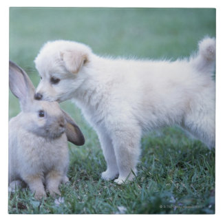 Puppy and Lop Ear Rabbit on lawn Tiles