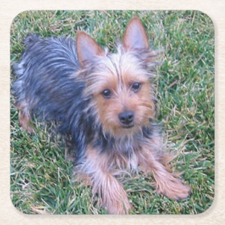 puppy australian silky terrier laying square paper coaster
