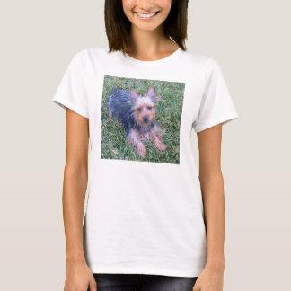 puppy australian silky terrier laying T-Shirt