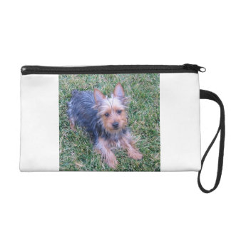 puppy australian silky terrier laying wristlet clutches