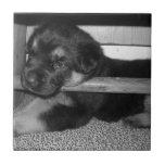 Puppy Black&White Tiles
