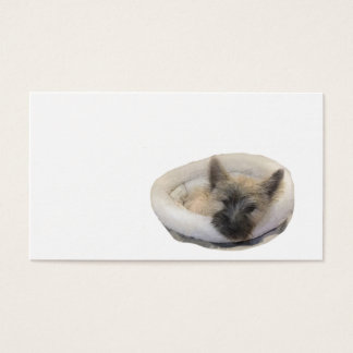 Puppy Card Cairn Terrier