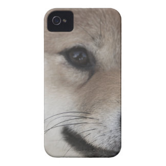 puppy Case-Mate iPhone 4 cases