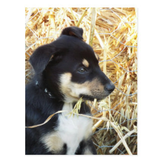 puppy chomping hay postcard