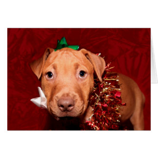 Puppy Christmas Greeting Card