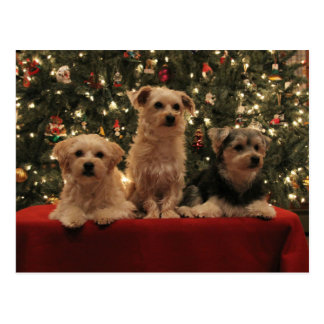Puppy Christmas Postcard 1
