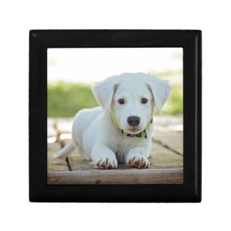 Puppy Dog Gift Box
