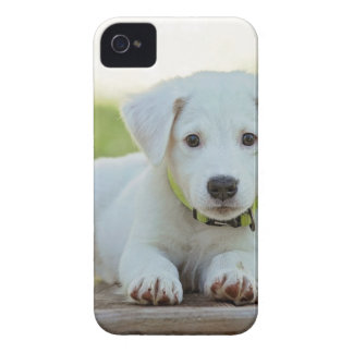 Puppy Dog iPhone 4 Covers
