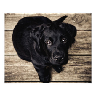 Puppy dog love photograph
