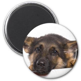 puppy German shepherd Magnet