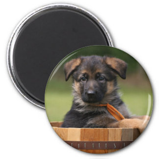 Puppy in a Planter Magnet