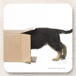 Puppy in cardboard box coaster