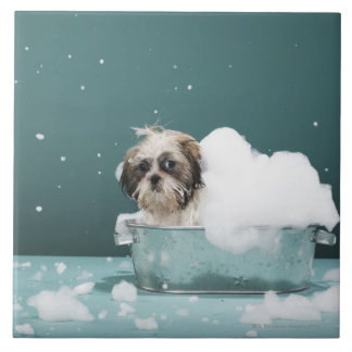 Puppy in foam bath tile