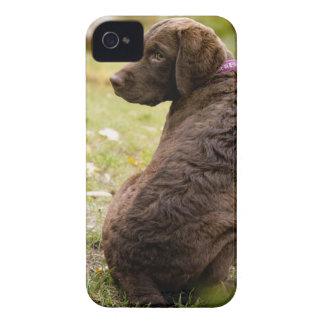 puppy iPhone 4 Case-Mate case