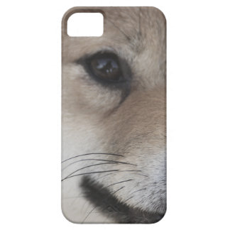 puppy iPhone 5 case