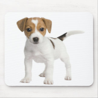 Puppy Jack russell Mouse Pad