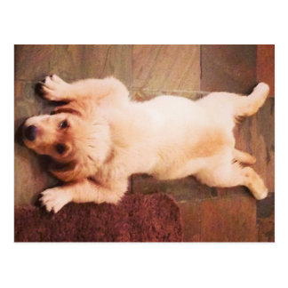 Puppy Laying Funny Postcard