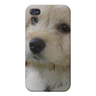 Puppy Love - Cute MaltiPoo Dog Photo iPhone 4 Case