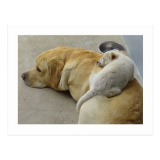 Puppy Love - Labrador and Mixed breed Puppy Postcard