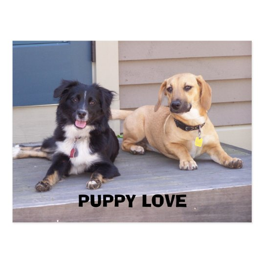 PUPPY LOVE POSTCARD