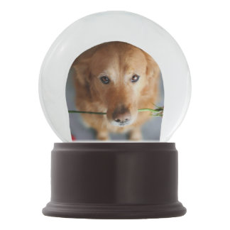 Puppy love snow globe