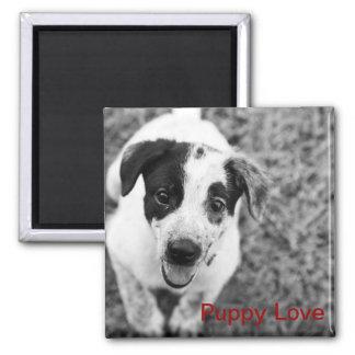 Puppy Love Square Magnet