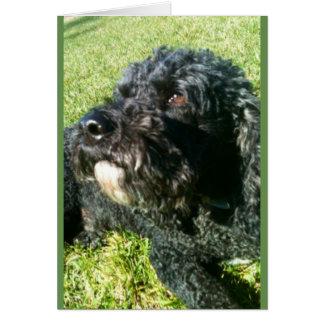Puppy Luv Card