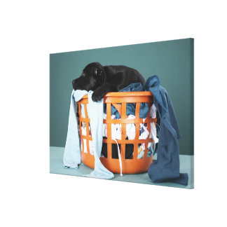 Puppy lying in laundry basket canvas prints