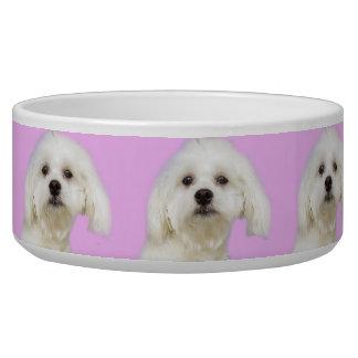 Puppy Maltese on pink
