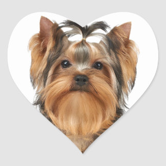 Puppy of the Yorkshire Terrier Heart Sticker