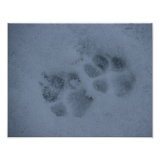 Puppy Paw Prints in Snow