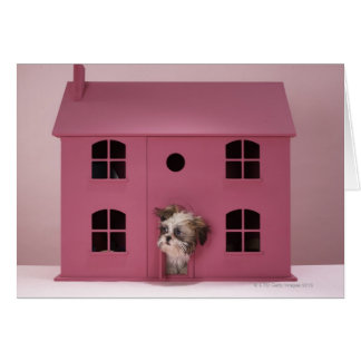 Puppy peering out of doll's house card