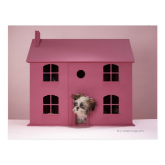 Puppy peering out of doll's house postcard