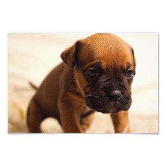 puppy photo print